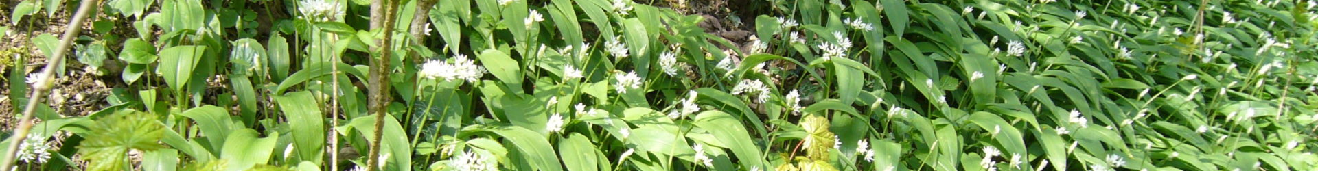Qigong meets Wildpflanzen – Frühjahrsputz
